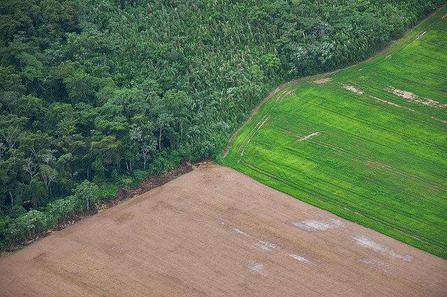 Forest-farm edge in the Bolivian Amazon