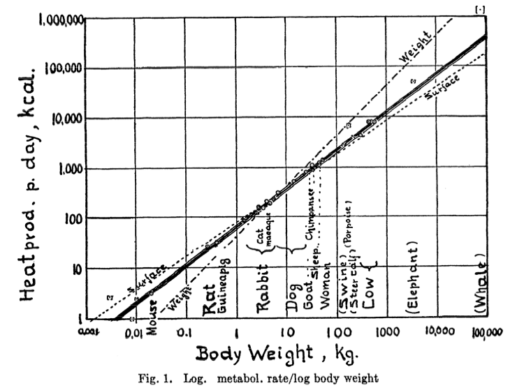 Relationship between body mass and metabolism, Kleiber 1947