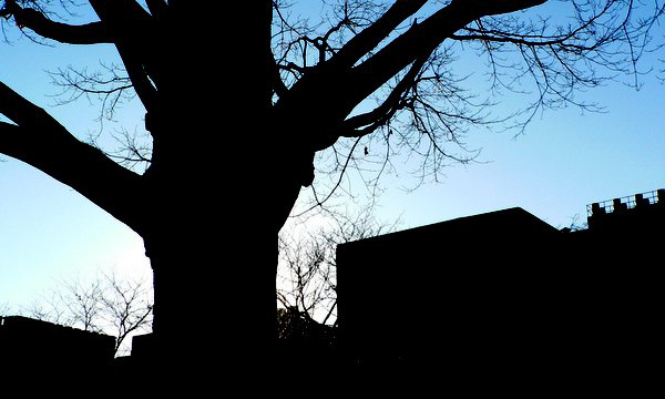 City tree silhouette