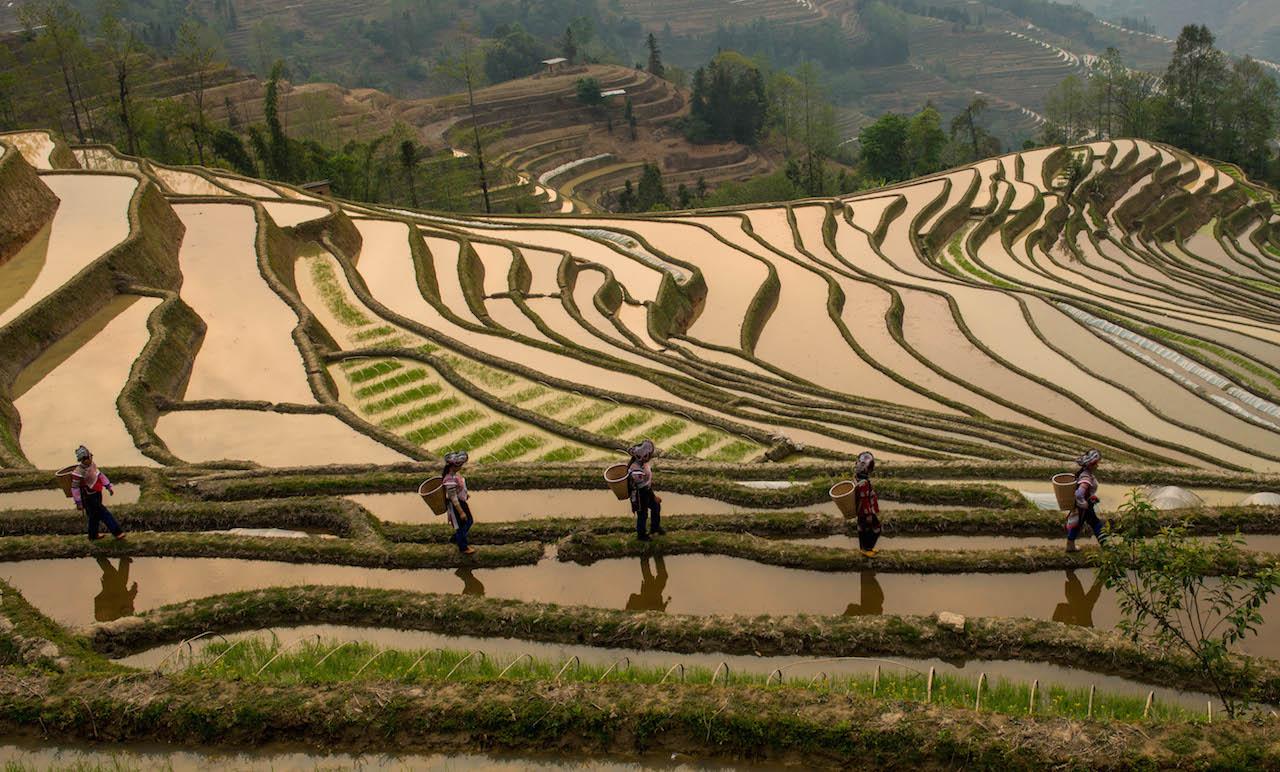 rice-paddies